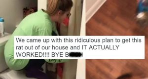 Girls Remove Rat From Home By Swinging Brooms Like Lacrosse Players (Video.)
