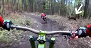Mountain Bikers Come Within Feet of Becoming Charging Bear's Lunch.