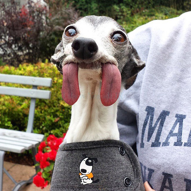 The Internet Can't Stop Photoshopping This Dog With a Giant Tongue